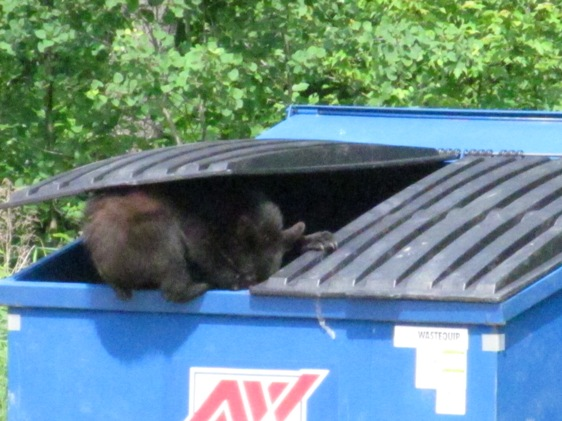 Man Digging through Trash Garbage Dumpster